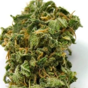 top-44-feminized-seeds
